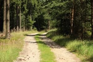 ochrana přírody – ochrana lesů a vodních toků